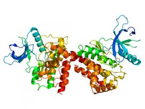 Genetica e Trombofilia